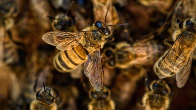 Seniorchef der Bienen - warum im Alter nicht zum Imker werden?