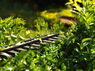 Kreativer Schatten- und Sichtschutz im Garten - Ratgeber